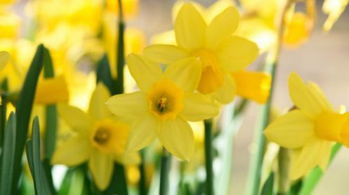 Afbeelding van prachtige lente bloemen. In de lente kan je allemaal leuke sponsoracties voor KiKa organiseren. Klik op de afbeelding en bekijk onze leukste tips!